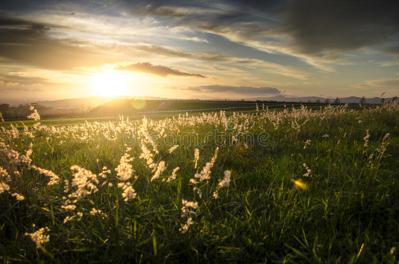 Solnedgång över gräslandskap arkivbilder