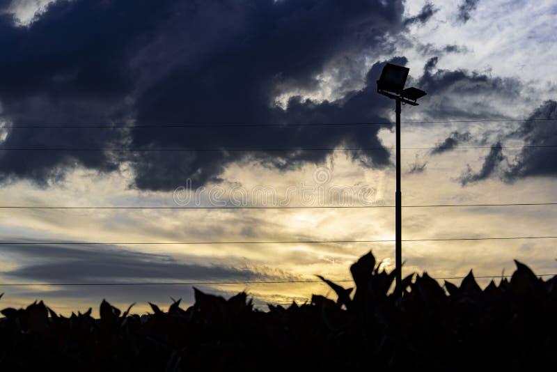 Solnedgång över häcken royaltyfria foton