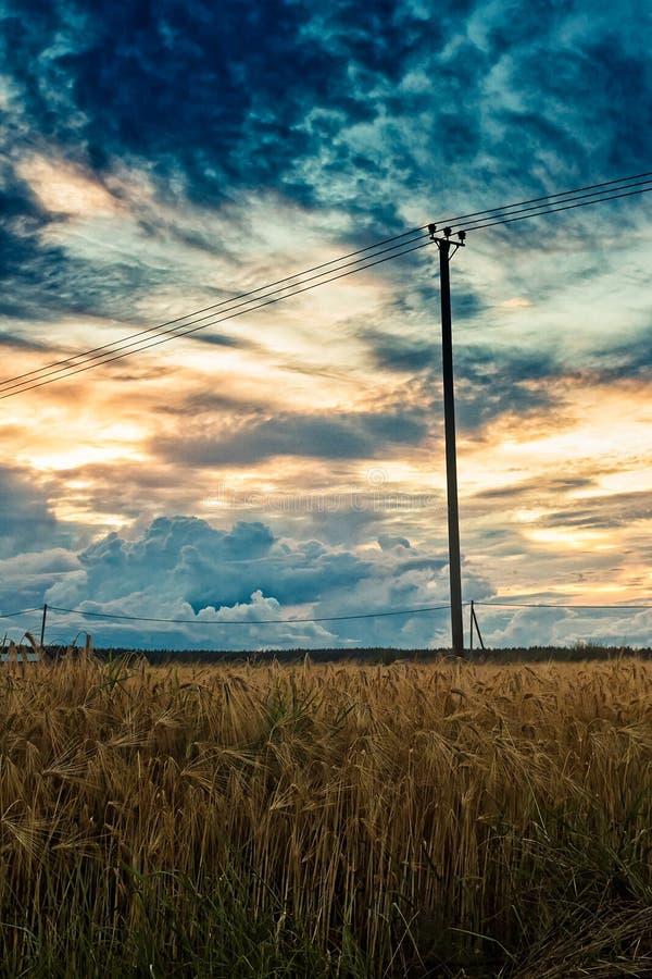 Solnedgång över kornfälten royaltyfria bilder