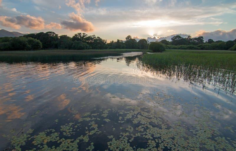 Solnedgång över loughen Leane [sjön Leane] med vattenlillies på cirkeln av Kerry i Killarney Irland royaltyfri bild