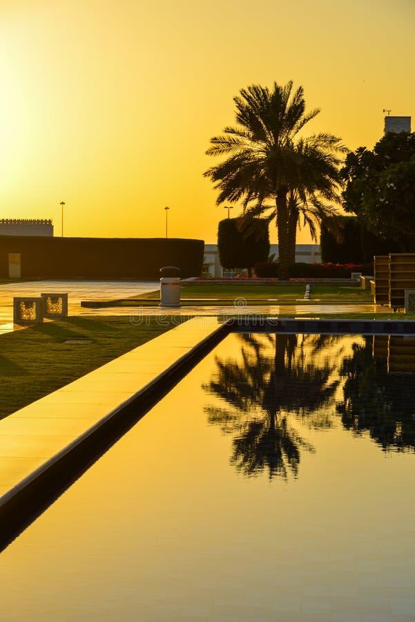 Solnedgång över pöl med palmträd royaltyfri fotografi