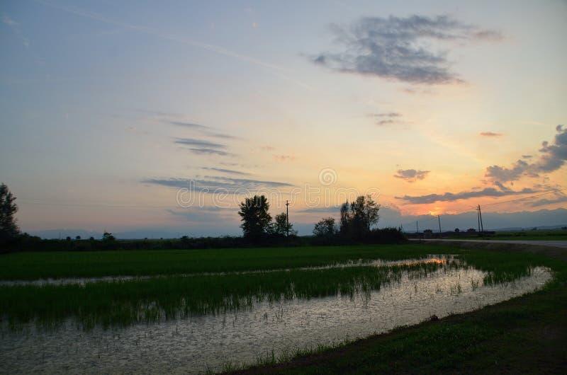 Solnedgång över risfälten i lite by royaltyfri fotografi
