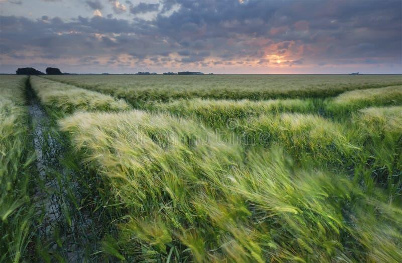 Solnedgång över sädes- fält i sommar arkivbilder