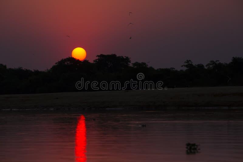 Solnedgång över Sandbar: Purpurfärgad himmel, rosa reflexion, G arkivfoton