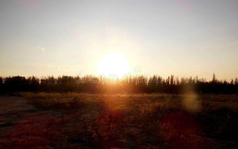 Solnedgång över skogen royaltyfri bild