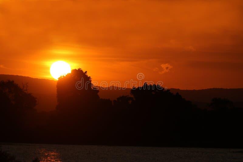 Solnedgång över skogen och behållaren royaltyfria bilder