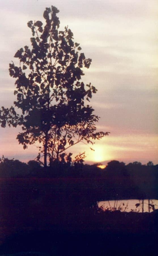 Solnedgång över träd royaltyfri foto