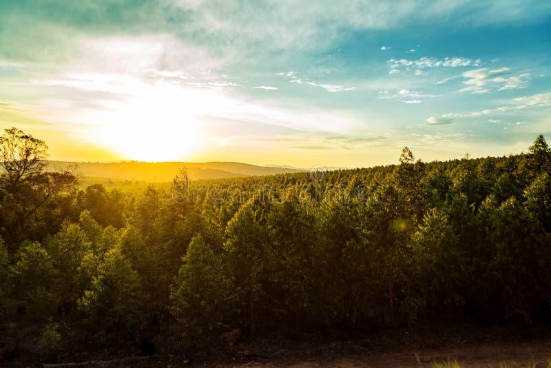 Solnedgång över träd och kullar i Sydafrika fotografering för bildbyråer