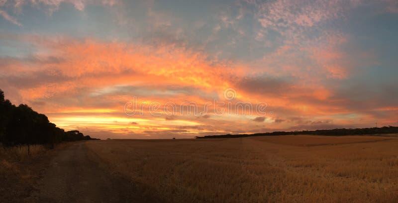 Solnedgång över veteskörd arkivfoton