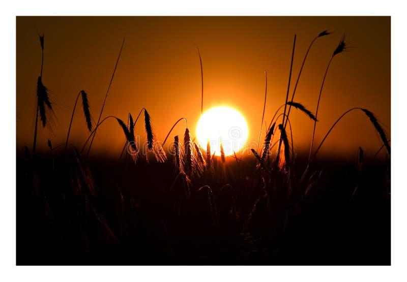 Download Solnedgång 2 arkivfoto. Bild av slut, fält, öra, mörkt - 289546
