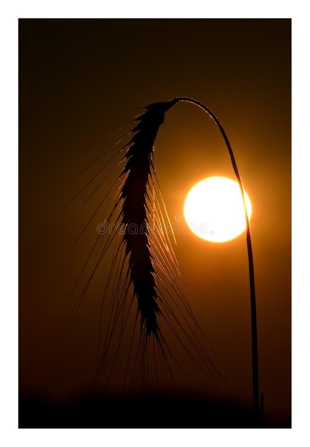 Download Solnedgång fotografering för bildbyråer. Bild av solnedgång - 289547