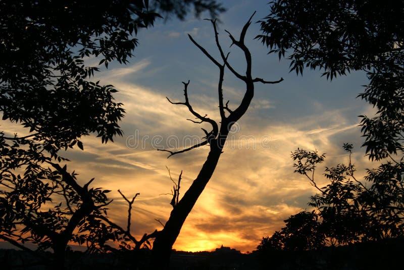 Solnedgång 3 Fotografering för Bildbyråer
