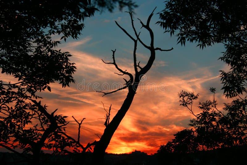 solnedgång 4 arkivbilder