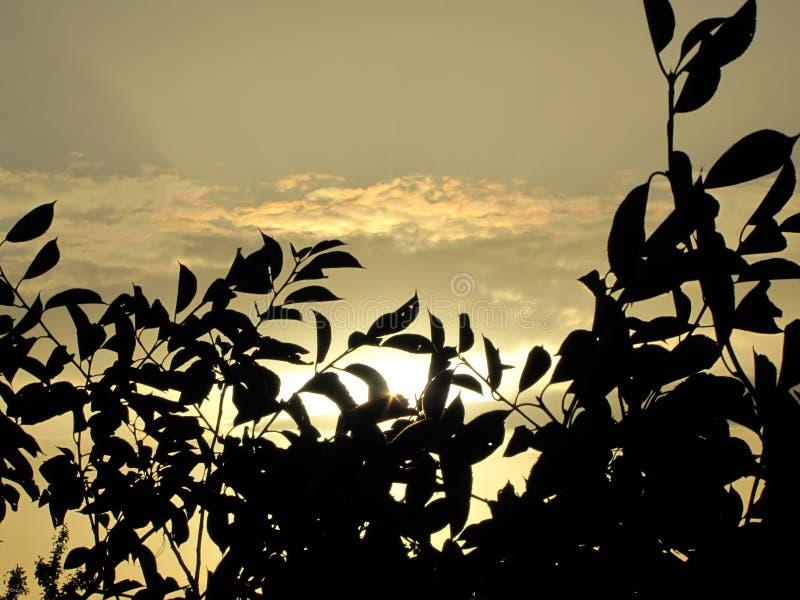 Solnedgång av en sol efter kronan av trädet arkivbilder