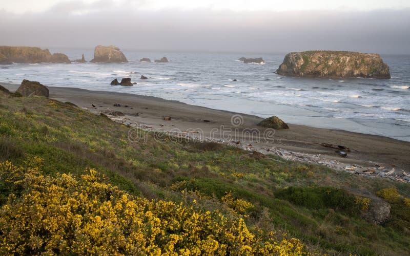 Solnedgång Bandon Oregon arkivfoto