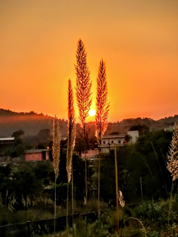 Solnedgång & blommor fotografering för bildbyråer