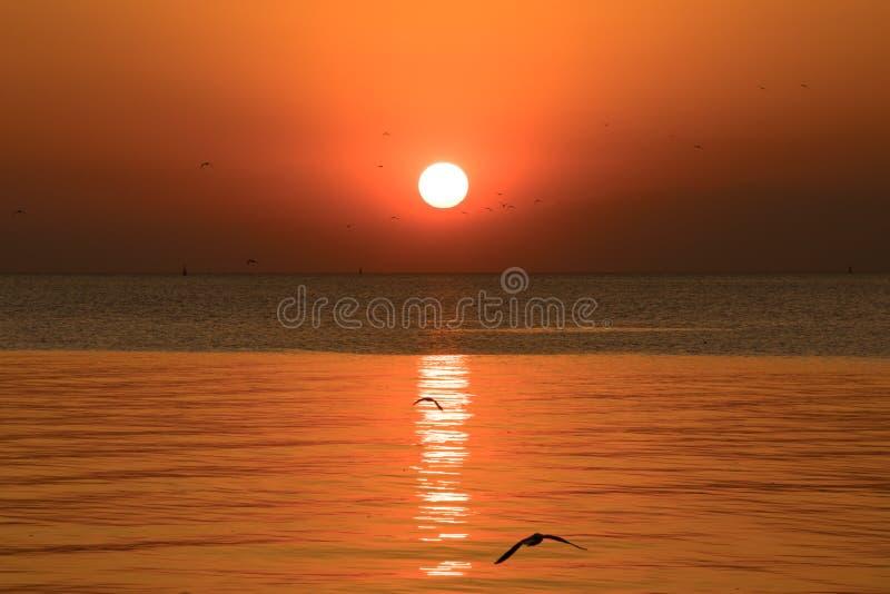 Solnedgång- eller aftontid med guld- himmel på havs- eller hav- och seagullfågelflyget på smällbajset, Samutprakan, Thailand arkivbild