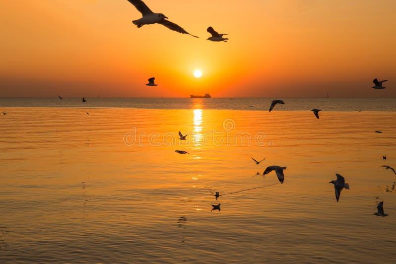 Solnedgång- eller aftontid med guld- himmel på havs- eller hav- och seagullfågelflyget på smällbajset, Samutprakan, Thailand fotografering för bildbyråer