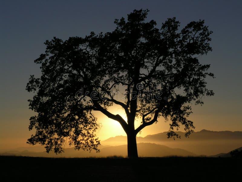 solnedgång för Kalifornien bergoak arkivfoto