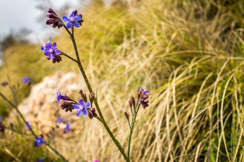 Solnedgång för natur för kronblad för sommar för äng för makroblomninggräsplan på blommor arkivfoto
