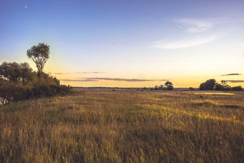Solnedgång för sommarbygdlandskap på det guld- sommarflatlandfältet med blommor och dramatisk lynnig himmel med guld- timme för m royaltyfria bilder