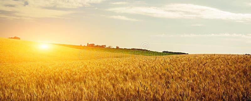 Solnedgång för veteskördfält royaltyfri fotografi