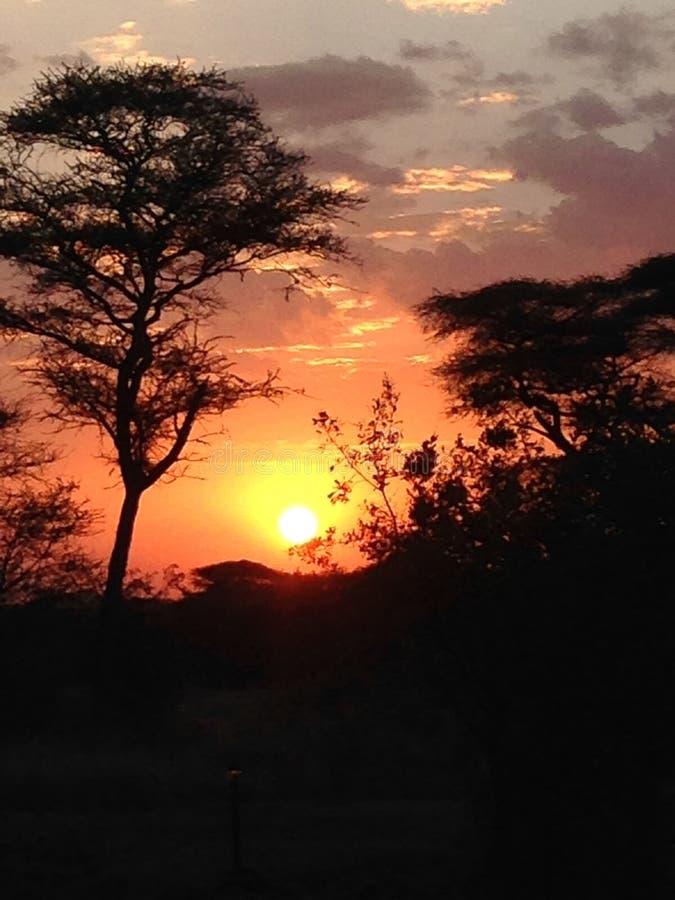 Solnedgång i Afrika arkivbild