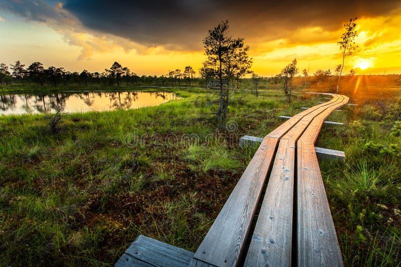 Solnedgång i den Kemeri nationalparken royaltyfri bild