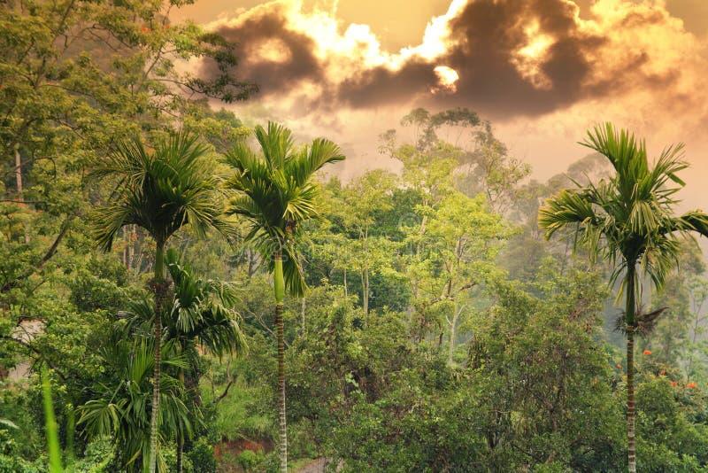 Solnedgång i djungel royaltyfri fotografi