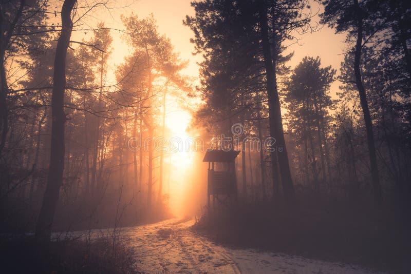 Solnedgång i djup dimmig vinterskog royaltyfri bild