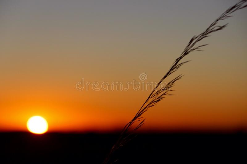 Solnedgång i en paddock royaltyfria foton