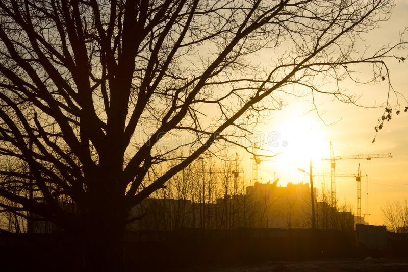 Solnedgång i en skog royaltyfri fotografi
