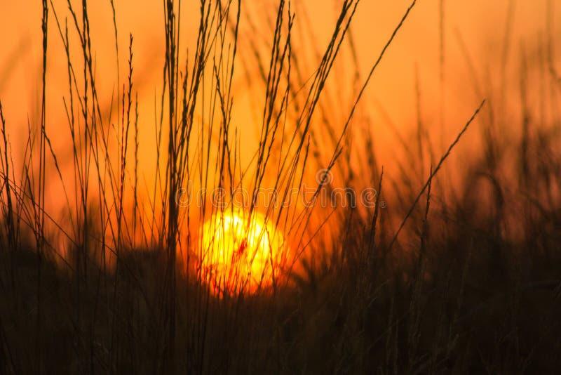 Solnedgång i ett gräs arkivbilder