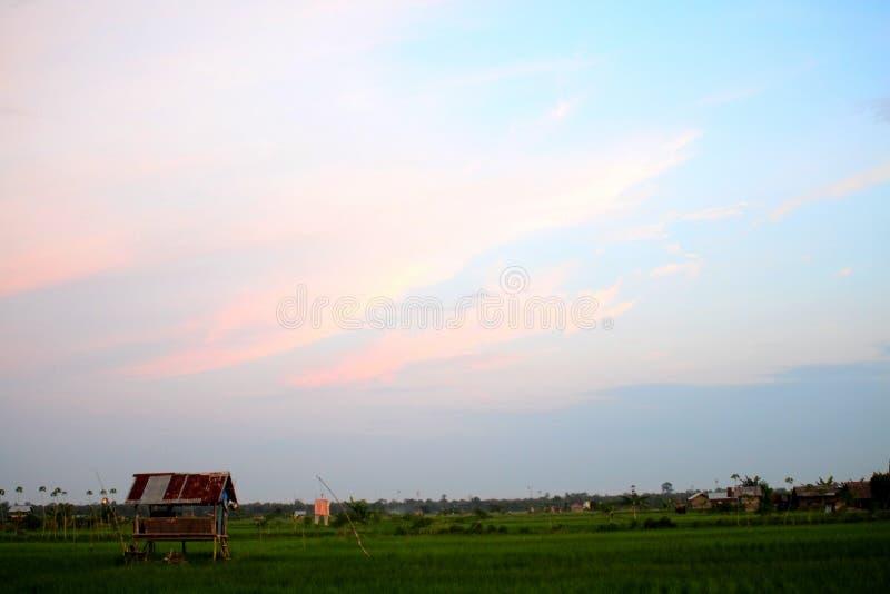 Solnedgång i fält royaltyfri fotografi