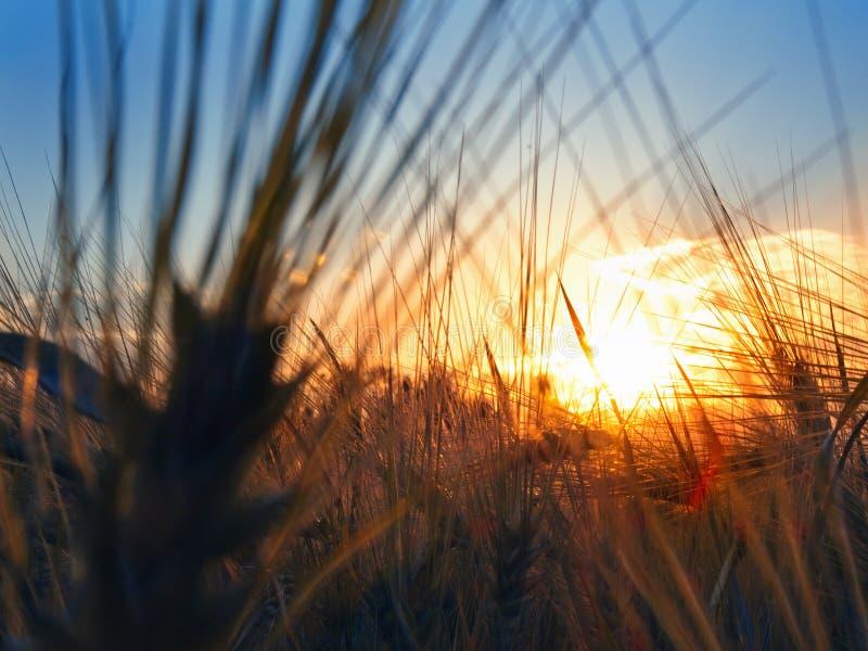 Solnedgång i fältet royaltyfria foton