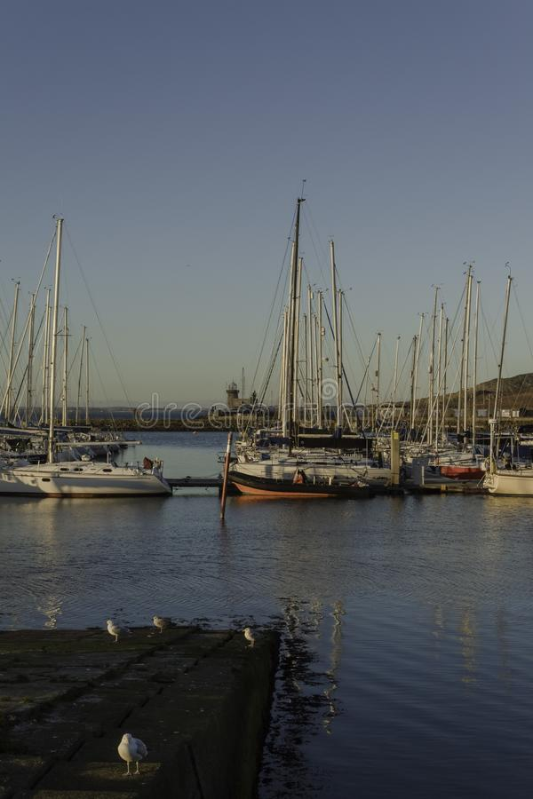 Solnedgång i hamnen med yachtsikt fotografering för bildbyråer