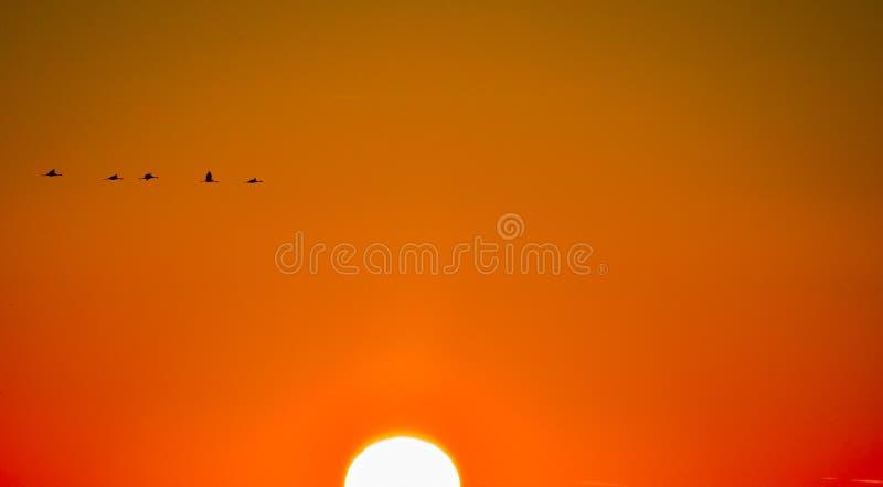 Solnedgång i HORTOBAGY arkivbilder