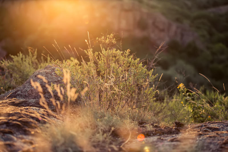 Solnedgång i kanjonen royaltyfri foto