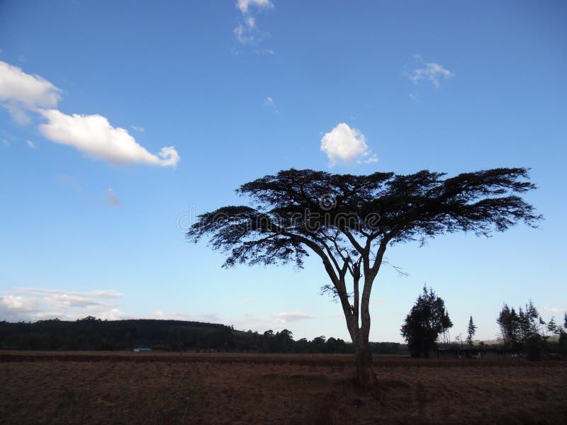 Solnedgång i kerichoen, Kenya fotografering för bildbyråer
