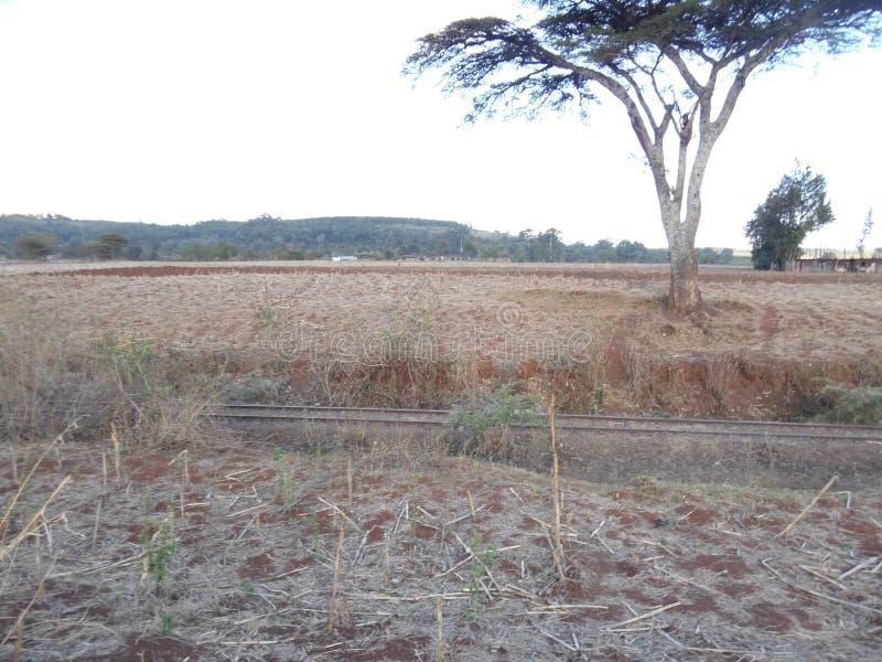 Solnedgång i kerichoen, Kenya royaltyfria bilder