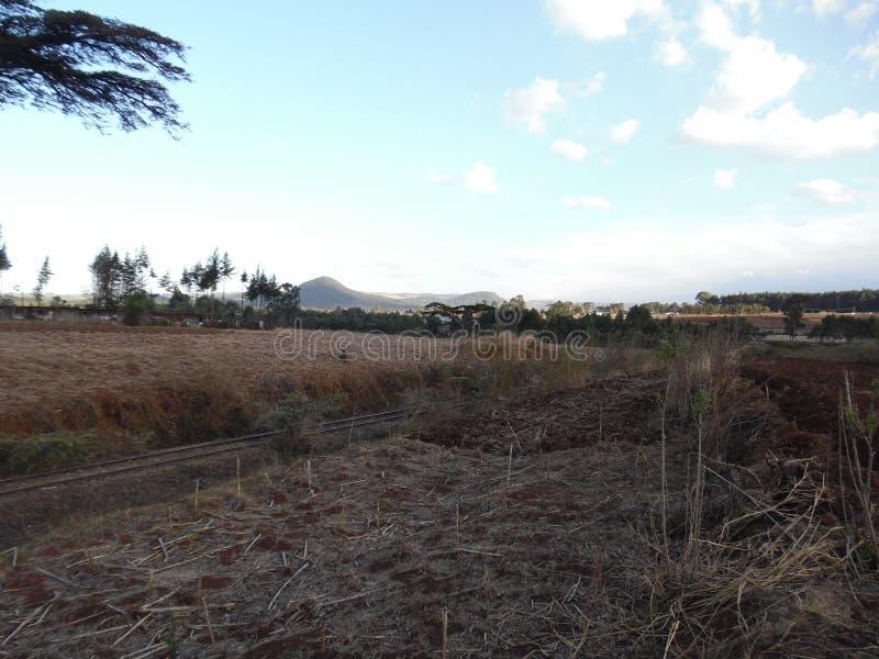 Solnedgång i kerichoen, Kenya arkivbilder