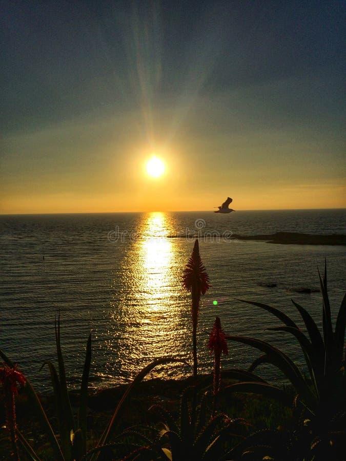 Solnedgång i Laguna Beach, CA fotografering för bildbyråer