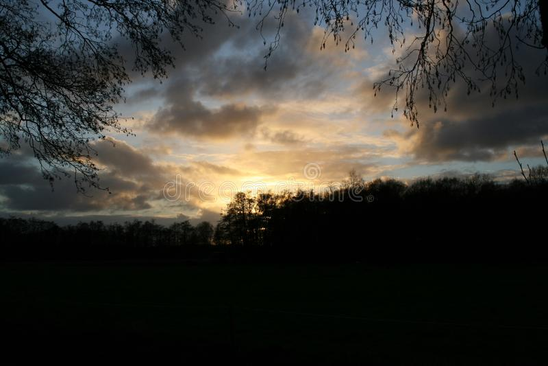 Solnedgång i mest forrest se till och med filialer över ett damm fotografering för bildbyråer