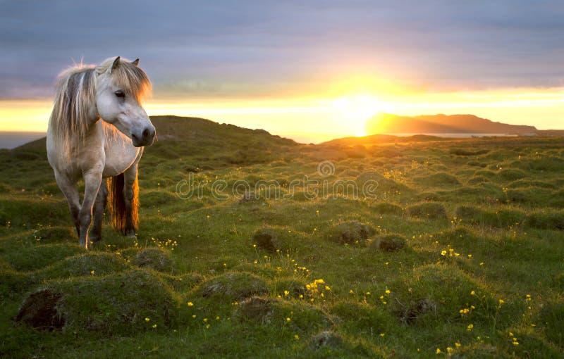 Solnedgång i norden arkivfoton