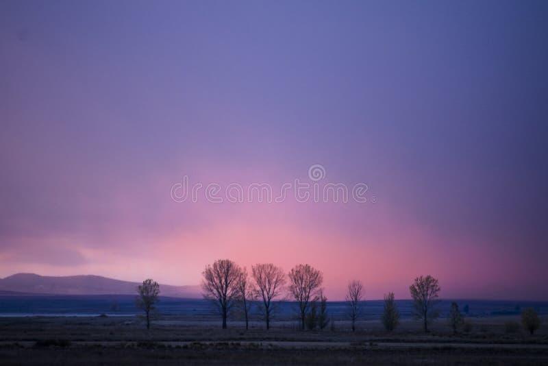 Solnedgång i sädes- fält royaltyfri foto