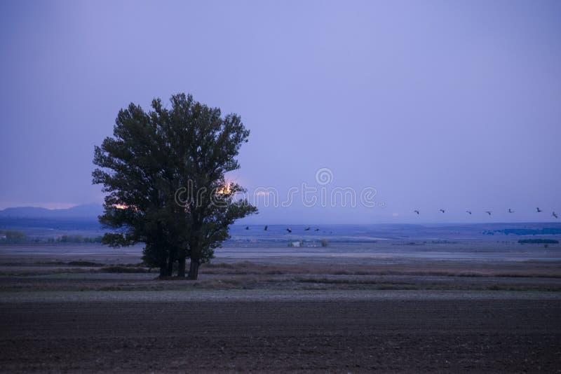 Solnedgång i sädes- fält royaltyfria bilder