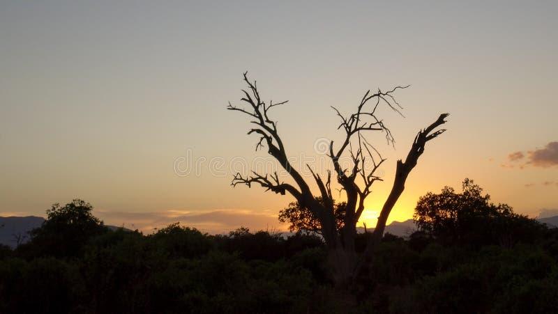 Solnedgång i savann i afrikansk sommar arkivfoto