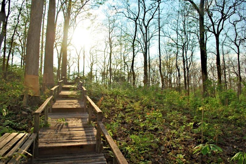 Solnedgång i skog royaltyfri foto