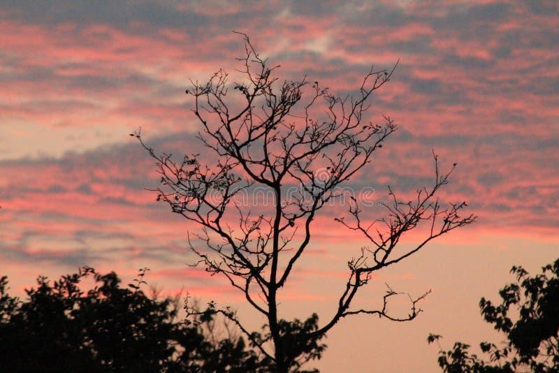 Solnedgång i skog av den kust- skogsmarken royaltyfri bild