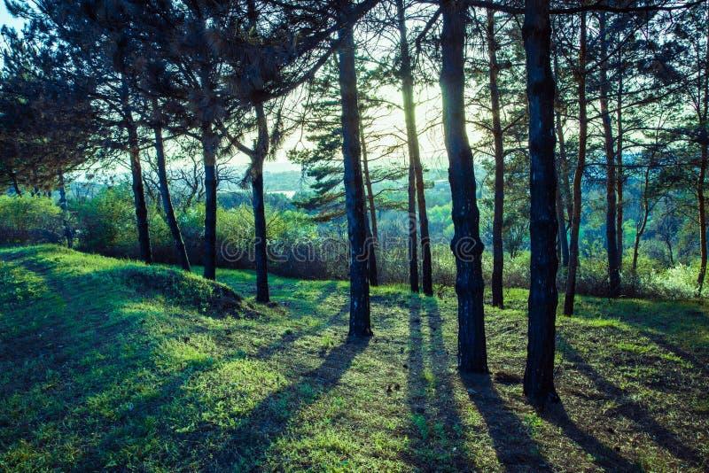 Solnedgång i skogen arkivfoton
